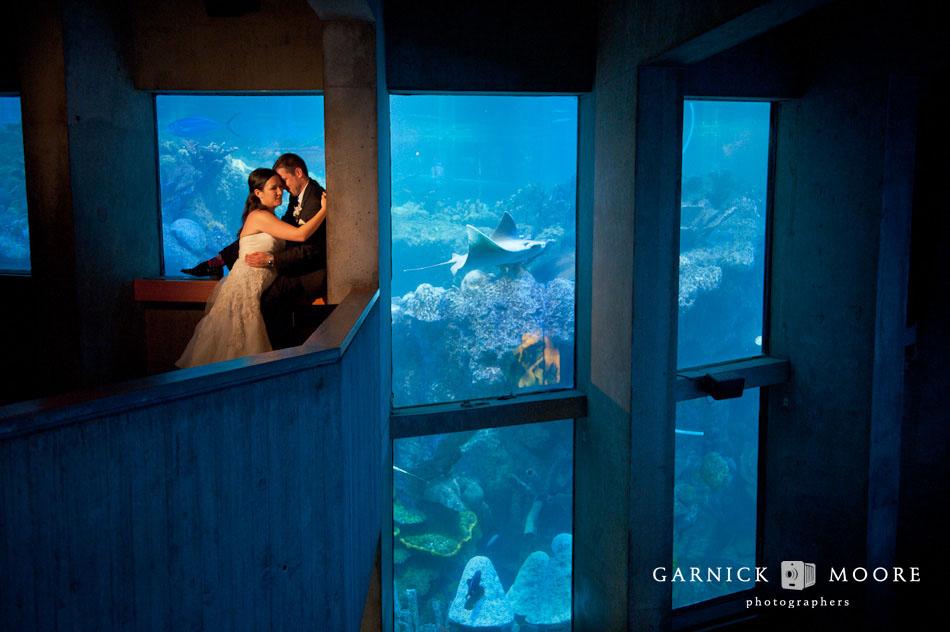 New England Aquarium Wedding Jessica Jeff Boston And